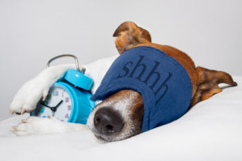 Dog sleeping soundly because he practices asset allocation.