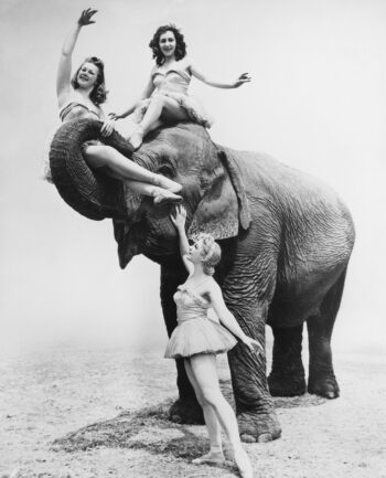 Three women playing withcircus elephant instead of trying to lose a bad annuity.